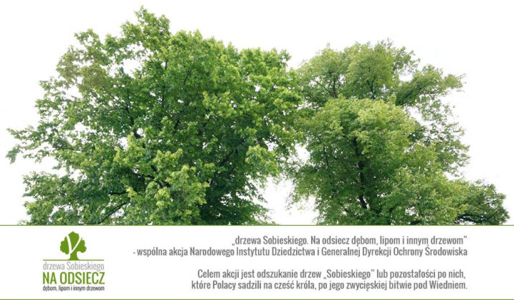 Na odsiecz drzewom 'Sobieskiego'!