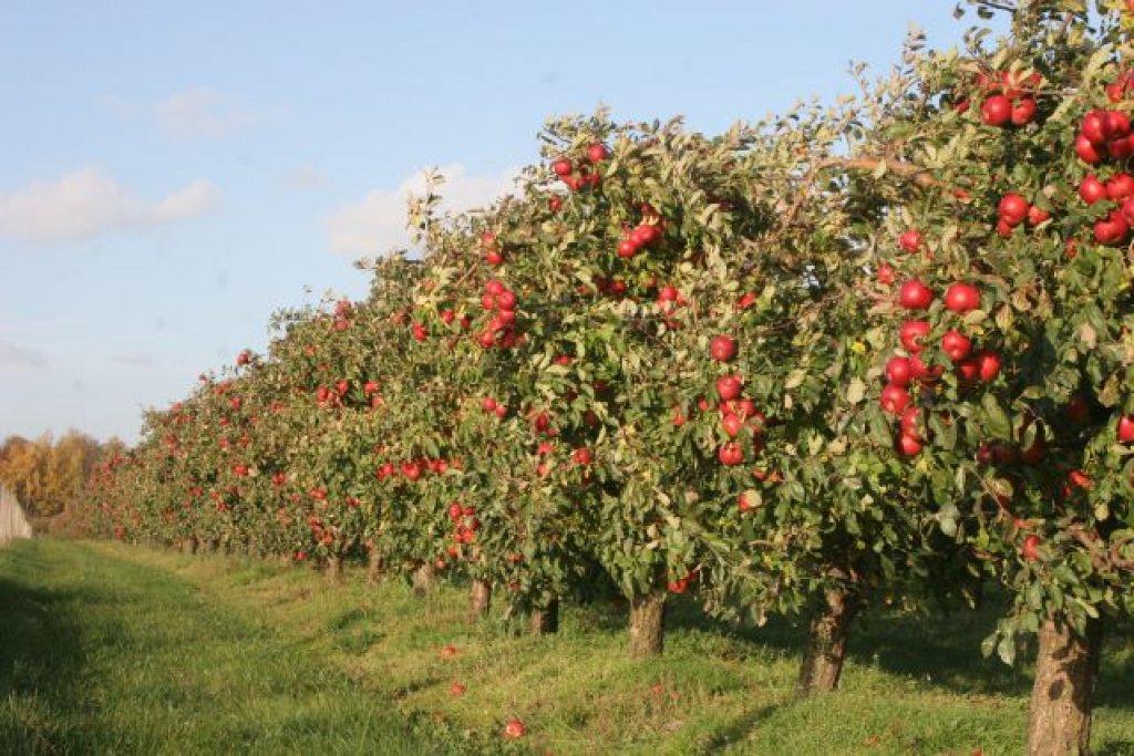 Zasady bezpiecznego stosowania środków ochrony roślin