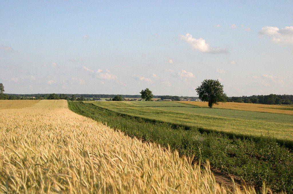 Wsparcie na modernizację gospodarstw rolnych