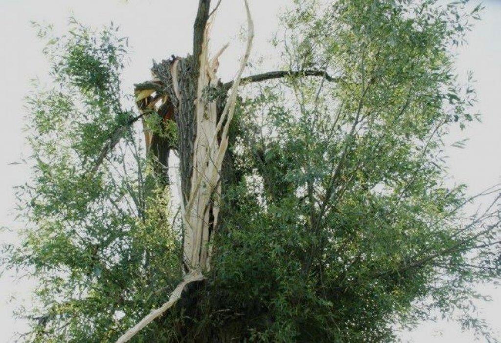 Zmiany w przepisach dotyczących usuwania drzew i krzewów