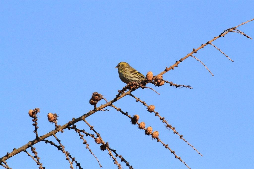 Zimowe Ptakoliczenie