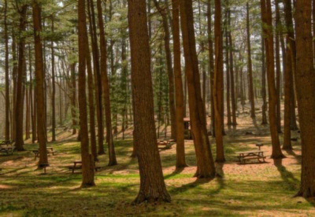 Wsparcie finansowe na zalesianie