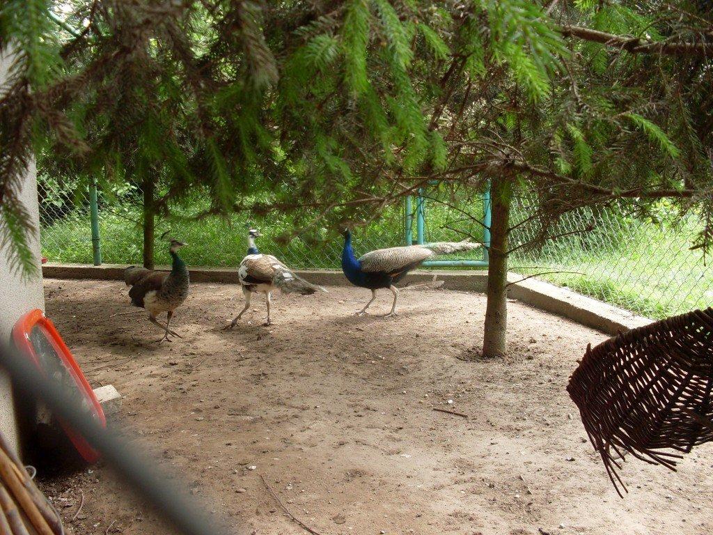Wizyta w Agro-Raju