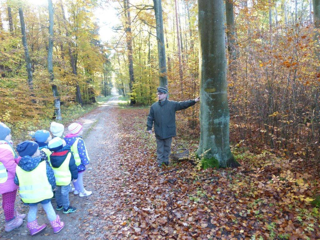 Edukacja leśna przedszkolaków