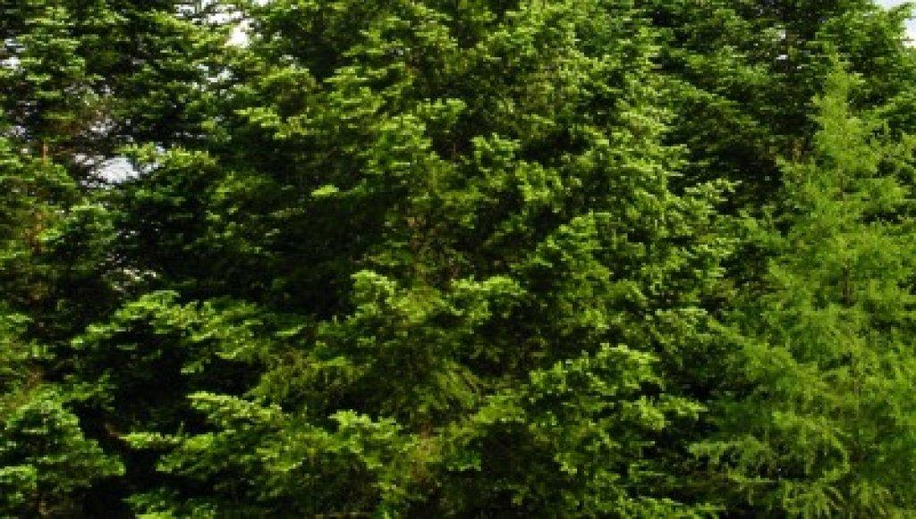 Zmiany w przepisach dotycących wycinki drzew