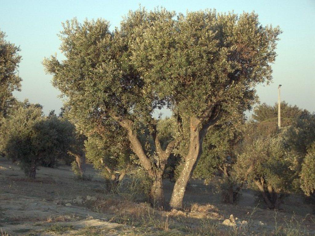 Nowe zasady usuwania drzew i krzewów