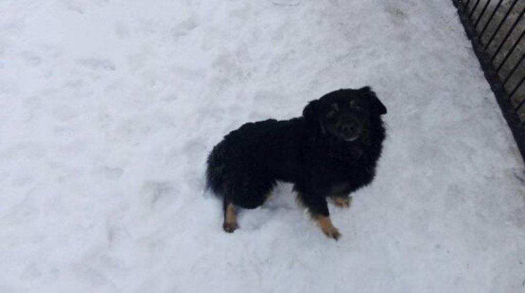 Poszukiwany właściciel psa