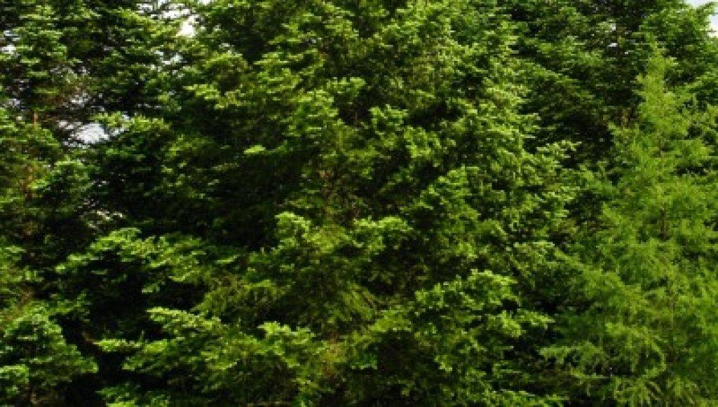 Zmiany w przepisach dotyczących wycinki drzew