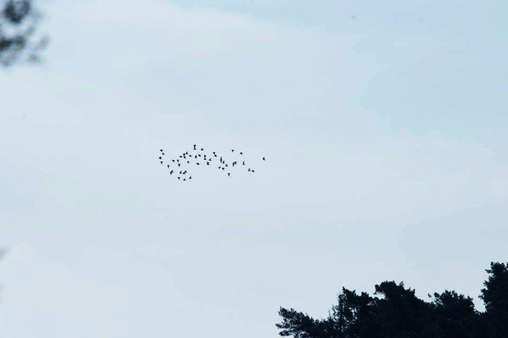 Pracownicy WPK zaobserwowali ptaki z gatunku batalion