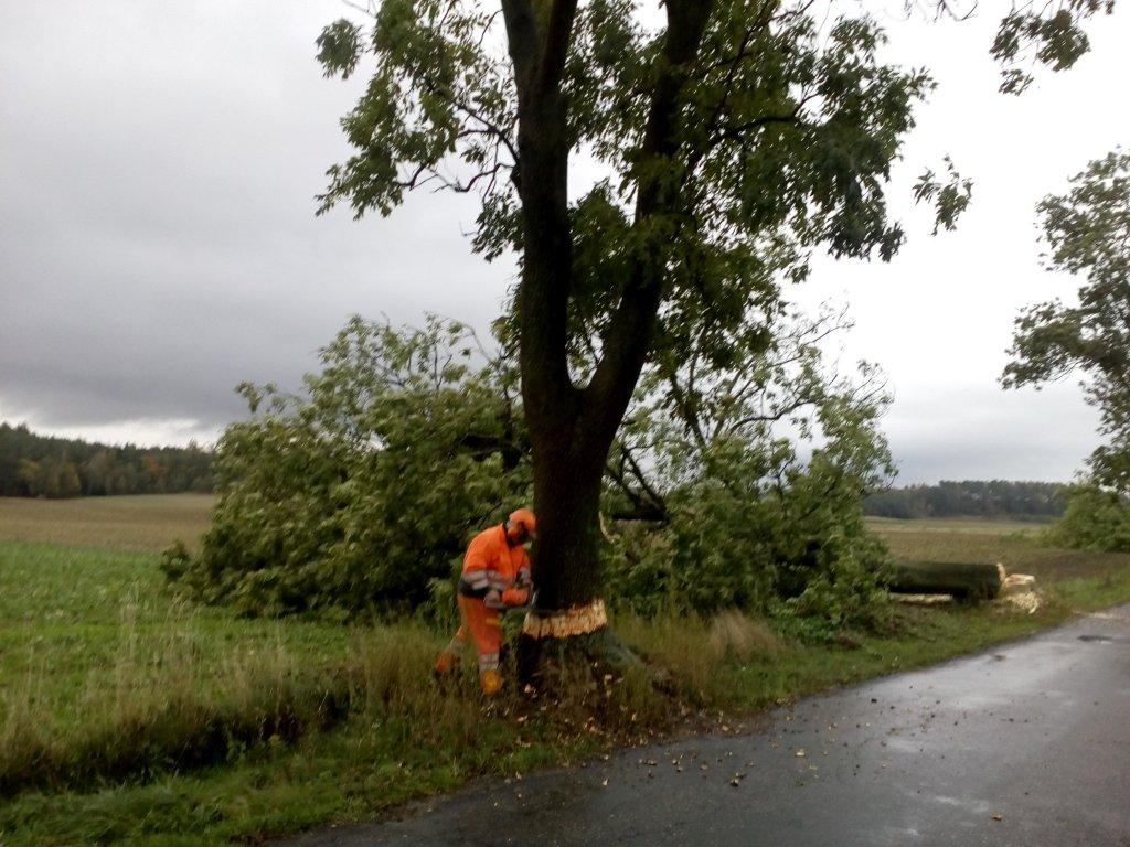 Trwa wycinka drzew przy drodze do Zwiniarza
