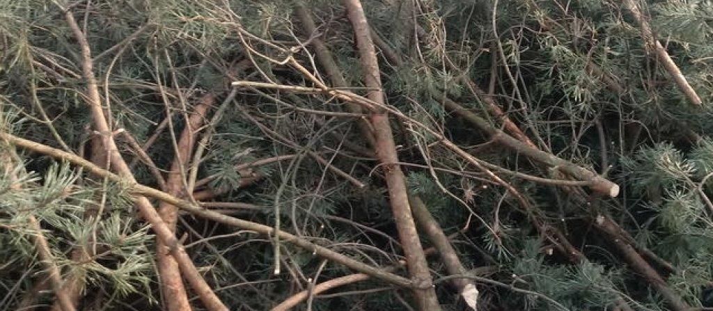 Odbiór gałęzi i krzewów