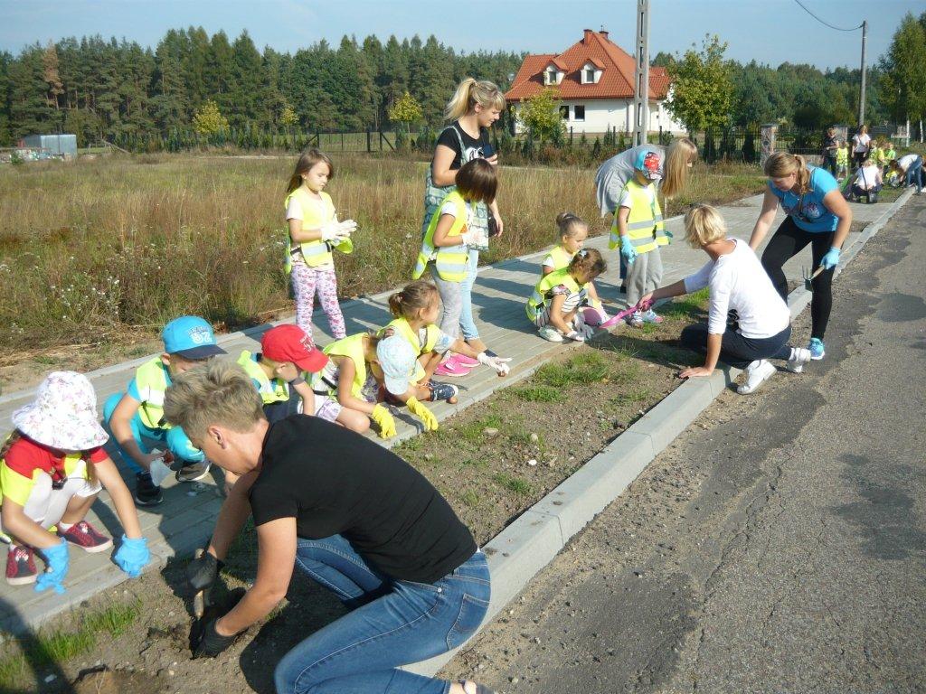 Akcja sadzenia tulipanów